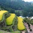 四国の棚田と山岳集落(高知県・香美市「逆川の棚田」)