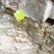 岩も割って出て来た〜力強い❣️