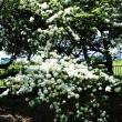 新緑の香る道保川公園を散歩