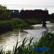 水温む綾瀬川を往く