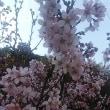 咲きました~