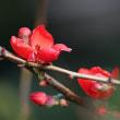 庭の花、庭の実
