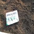 ビニールハウスで 10種類播種して発芽待ち
