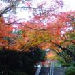 神道山の紅葉