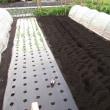 白菜、セロリ、レタスの畝を準備
