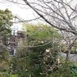 桜まつり@伊豆高原