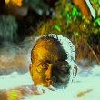 映画 地獄の黙示録(1979) 戦争映画と言われるが・・・