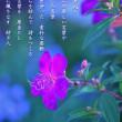 photo  poem    - 紡ぎ人 -