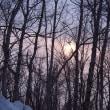 野幌森林公園ふれあいコースにぼんやりした日が射して