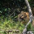 ライオン・母子  Lion /ケニア Kenya 2