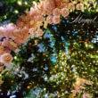 ☆5月の薫風と鯉のぼり・・・☆