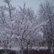 積雪になりました!
