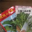 雪菜、三陸つぼみ菜など播種
