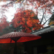 新座市野火止・平林寺の紅葉が素晴らしい!!