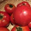 【元気のないトマトが「ナルナル菌」で復活❣️収穫した野菜で〜「夏野菜たっぷりカレー」♬】