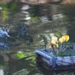 水上を華麗に舞うダイサギ・・・