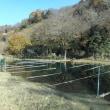 12/10  久し振りか年内最後か相模川上大島へ雑魚釣りにと川見に行きました!