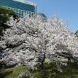 「桜」/浜離宮恩賜庭園(2019春)