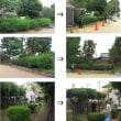 6.5 大和田北公園環境整備①