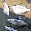 猛暑の中下津井へ釣りに
