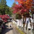 206 アチャコの京都日誌 再びの京都 秀吉一夜造りの塔とは?
