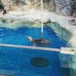 水族館、ペンギン☆