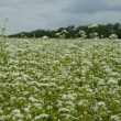 白銀の蕎麦畑