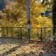 庭に舞い降りて来ている枯れ葉