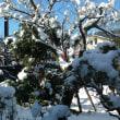 今冬 初冠雪!