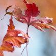 秋色ものがたり(Ⅶ)