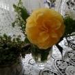 グラハム・トーマス 二番花