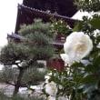 藤井寺道場 平成31年1月10日(木)