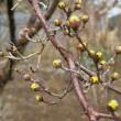 枝垂桜の樹皮の色