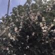 金銀の花の咲く頃