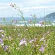 伊良湖のタカ渡り(4月25日・最終日)