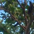 鳩間島2 青鳩