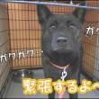 ☆熊太(クウタ)くんの初お泊り体験記☆