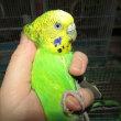 オリーヴの鳥籠