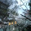小伝馬町十思公園の桜
