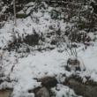 昨日は今年初めての初雪となった。