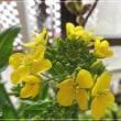 ひゅうがみずきとビタミンカラーの花