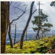 登山道の風景 金立山