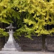 22日の散歩 ( 今宮神社、大徳寺、船岡山、十二坊からの秋だより )