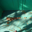 葉っぱハッピー