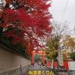 旧三井家下鴨別邸 ~京都 秋の限定公開~