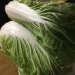 白菜でお好み焼き