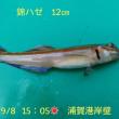 笑転爺の釣行記 9月8日☁☀ 久里浜・浦賀