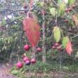 野辺山の秋