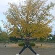 銀杏の木の下で