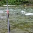 アユ釣り情報:馬瀬川でちょっとだけ竿だし・・・
